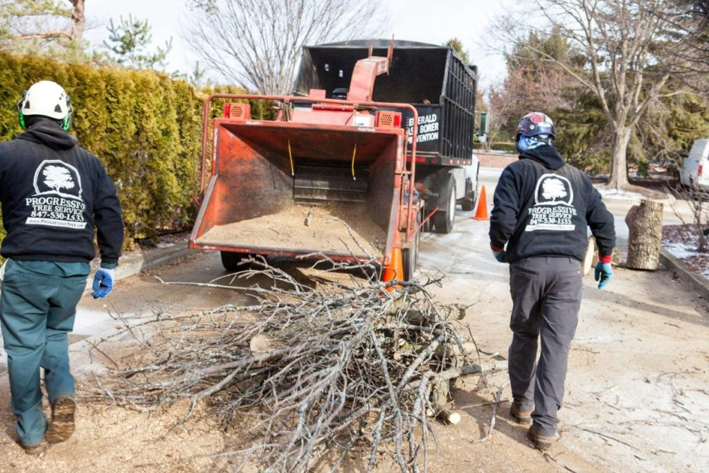 Commercial-Tree-Services-San Bernardino Tree Trimming and Stump Grinding Services-We Offer Tree Trimming Services, Tree Removal, Tree Pruning, Tree Cutting, Residential and Commercial Tree Trimming Services, Storm Damage, Emergency Tree Removal, Land Clearing, Tree Companies, Tree Care Service, Stump Grinding, and we're the Best Tree Trimming Company Near You Guaranteed!
