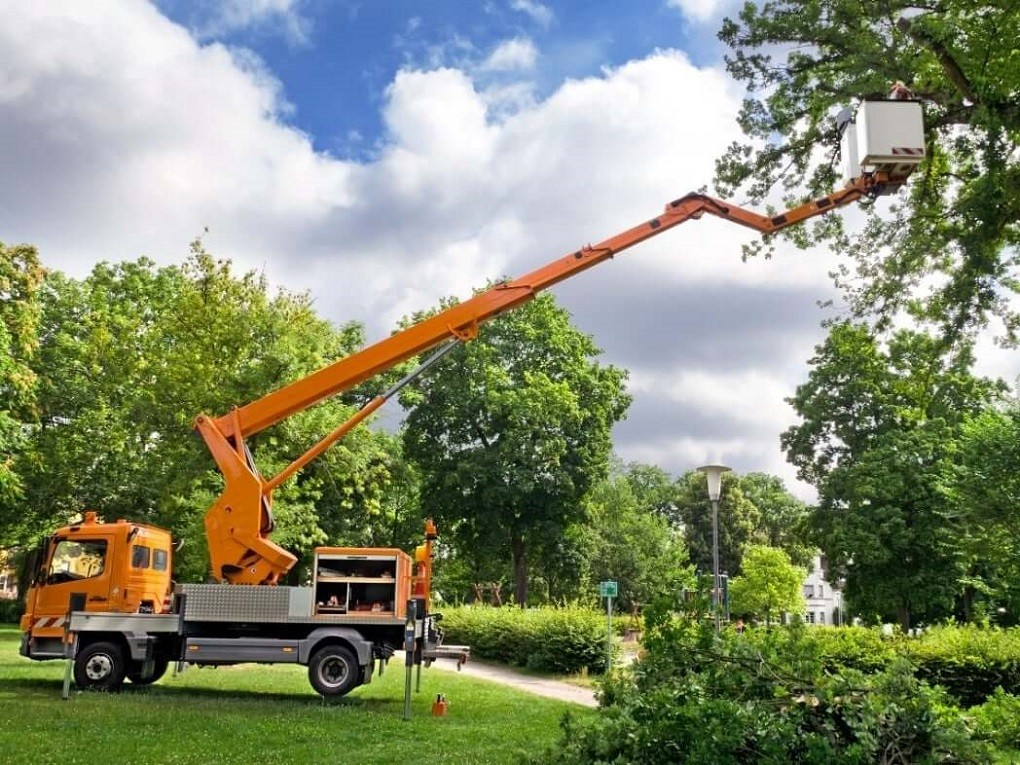 Contact Us-San Bernardino Tree Trimming and Stump Grinding Services-We Offer Tree Trimming Services, Tree Removal, Tree Pruning, Tree Cutting, Residential and Commercial Tree Trimming Services, Storm Damage, Emergency Tree Removal, Land Clearing, Tree Companies, Tree Care Service, Stump Grinding, and we're the Best Tree Trimming Company Near You Guaranteed!