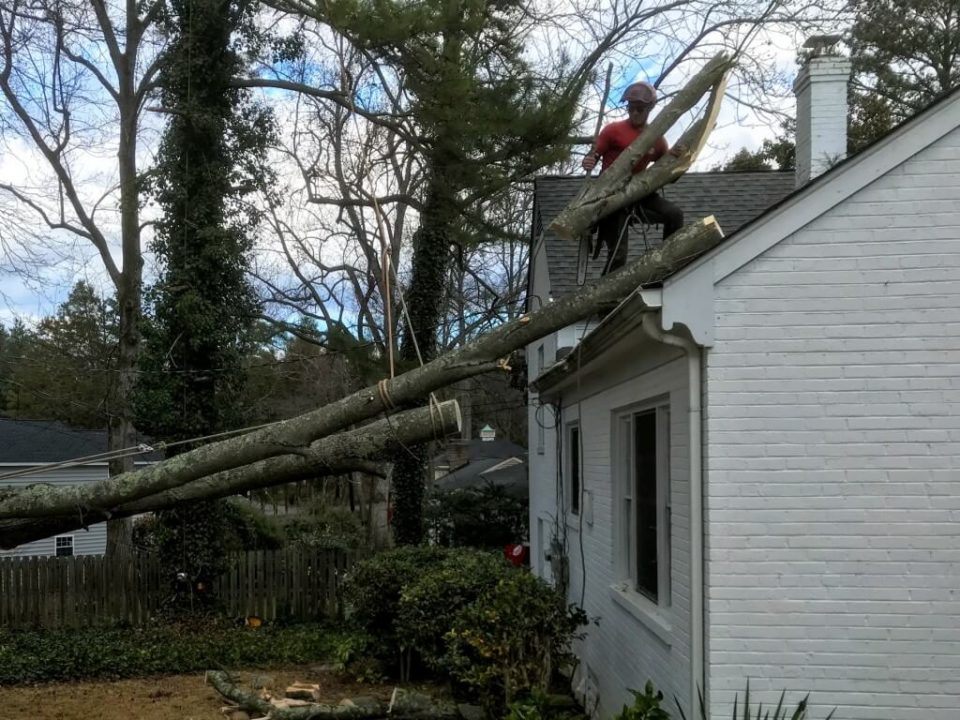 Emergency-Tree-Removal-San Bernardino Tree Trimming and Stump Grinding Services-We Offer Tree Trimming Services, Tree Removal, Tree Pruning, Tree Cutting, Residential and Commercial Tree Trimming Services, Storm Damage, Emergency Tree Removal, Land Clearing, Tree Companies, Tree Care Service, Stump Grinding, and we're the Best Tree Trimming Company Near You Guaranteed!