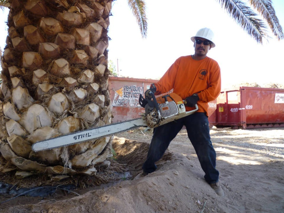 Palm-Tree-Removal-San Bernardino Tree Trimming and Stump Grinding Services-We Offer Tree Trimming Services, Tree Removal, Tree Pruning, Tree Cutting, Residential and Commercial Tree Trimming Services, Storm Damage, Emergency Tree Removal, Land Clearing, Tree Companies, Tree Care Service, Stump Grinding, and we're the Best Tree Trimming Company Near You Guaranteed!