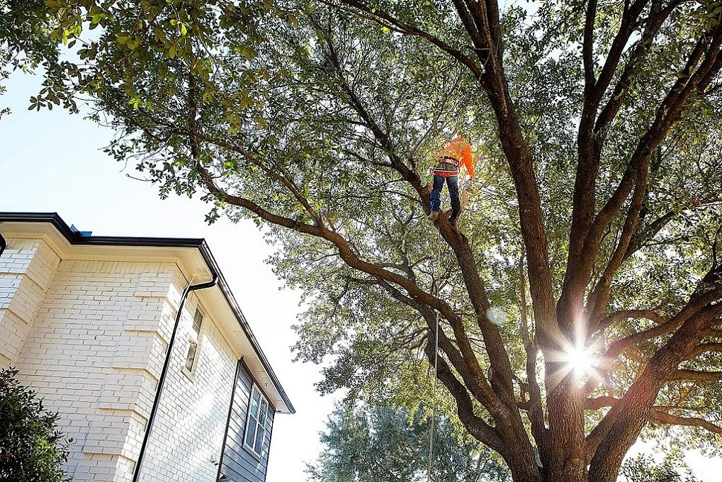 San Bernardino Tree Trimming and Stump Grinding Services Header Image new-We Offer Tree Trimming Services, Tree Removal, Tree Pruning, Tree Cutting, Residential and Commercial Tree Trimming Services, Storm Damage, Emergency Tree Removal, Land Clearing, Tree Companies, Tree Care Service, Stump Grinding, and we're the Best Tree Trimming Company Near You Guaranteed!