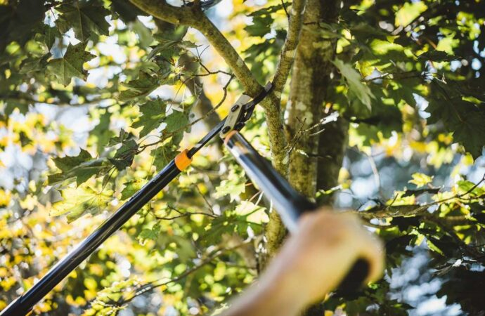 Tree-Pruning-San Bernardino Tree Trimming and Stump Grinding Services-We Offer Tree Trimming Services, Tree Removal, Tree Pruning, Tree Cutting, Residential and Commercial Tree Trimming Services, Storm Damage, Emergency Tree Removal, Land Clearing, Tree Companies, Tree Care Service, Stump Grinding, and we're the Best Tree Trimming Company Near You Guaranteed!