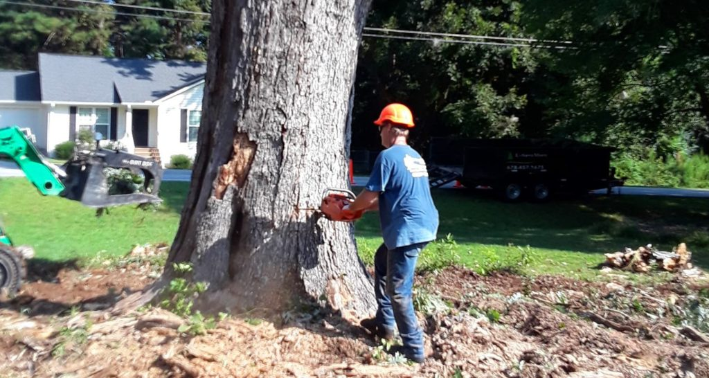 Tree-Removal-San Bernardino Tree Trimming and Stump Grinding Services-We Offer Tree Trimming Services, Tree Removal, Tree Pruning, Tree Cutting, Residential and Commercial Tree Trimming Services, Storm Damage, Emergency Tree Removal, Land Clearing, Tree Companies, Tree Care Service, Stump Grinding, and we're the Best Tree Trimming Company Near You Guaranteed!