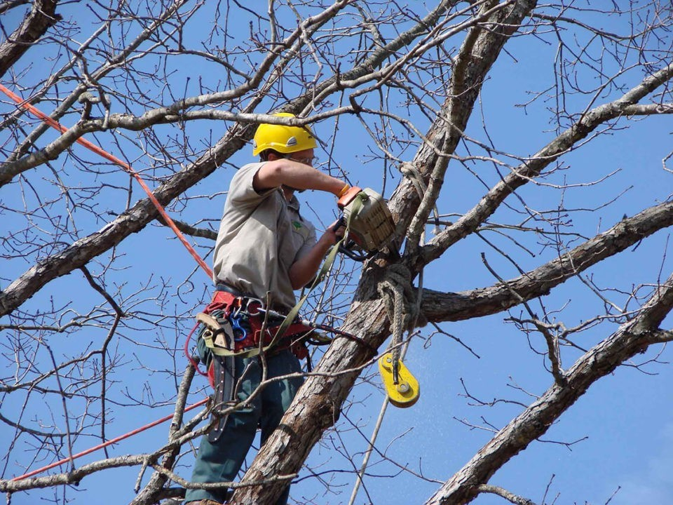 Tree-Trimming-San Bernardino Tree Trimming and Stump Grinding Services-We Offer Tree Trimming Services, Tree Removal, Tree Pruning, Tree Cutting, Residential and Commercial Tree Trimming Services, Storm Damage, Emergency Tree Removal, Land Clearing, Tree Companies, Tree Care Service, Stump Grinding, and we're the Best Tree Trimming Company Near You Guaranteed!