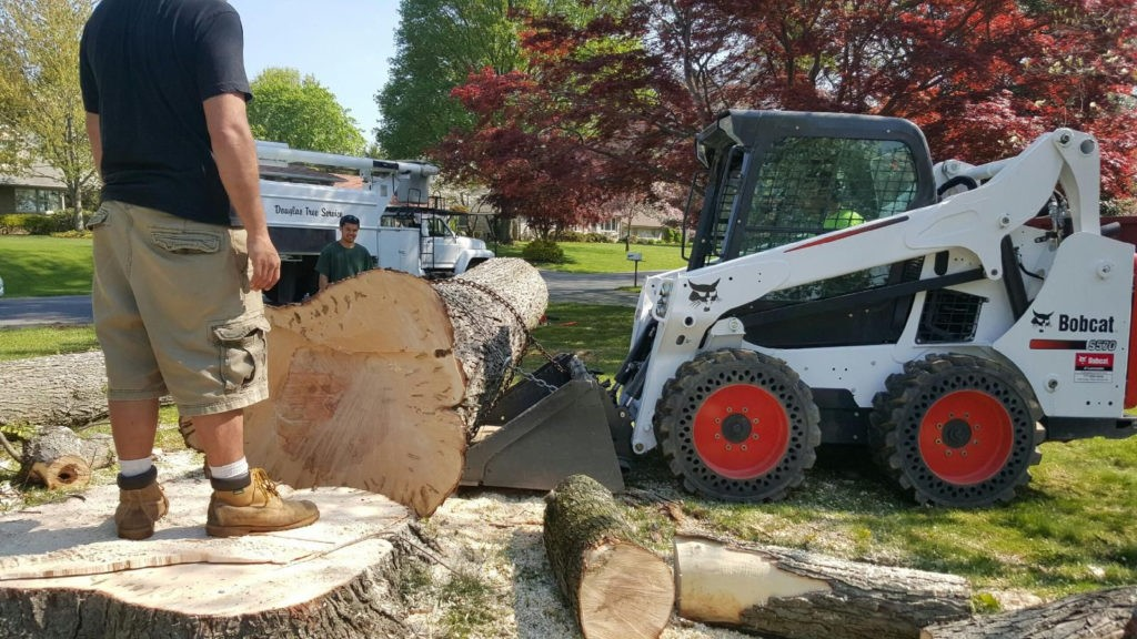 Colton-San Bernardino Tree Trimming and Stump Grinding Services-We Offer Tree Trimming Services, Tree Removal, Tree Pruning, Tree Cutting, Residential and Commercial Tree Trimming Services, Storm Damage, Emergency Tree Removal, Land Clearing, Tree Companies, Tree Care Service, Stump Grinding, and we're the Best Tree Trimming Company Near You Guaranteed!