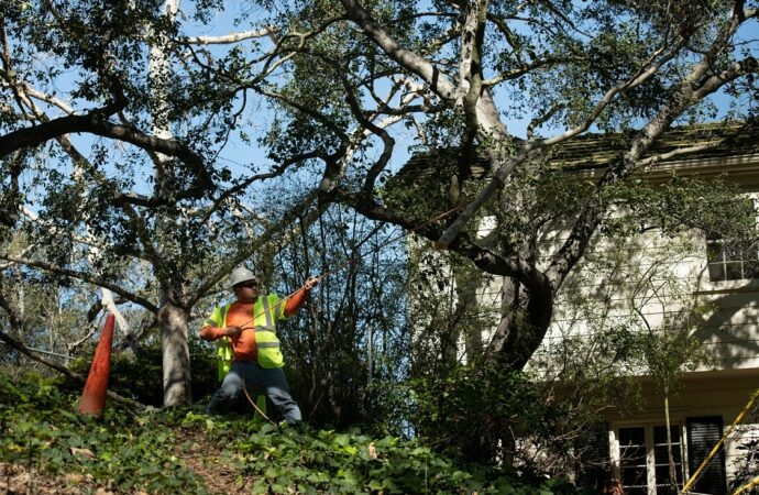 Highland-San Bernardino Tree Trimming and Stump Grinding Services-We Offer Tree Trimming Services, Tree Removal, Tree Pruning, Tree Cutting, Residential and Commercial Tree Trimming Services, Storm Damage, Emergency Tree Removal, Land Clearing, Tree Companies, Tree Care Service, Stump Grinding, and we're the Best Tree Trimming Company Near You Guaranteed!
