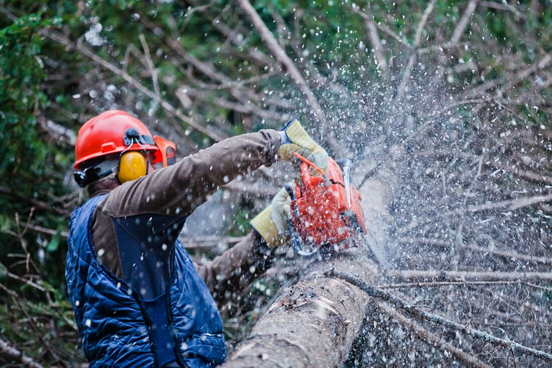Rialto-San Bernardino Tree Trimming and Stump Grinding Services-We Offer Tree Trimming Services, Tree Removal, Tree Pruning, Tree Cutting, Residential and Commercial Tree Trimming Services, Storm Damage, Emergency Tree Removal, Land Clearing, Tree Companies, Tree Care Service, Stump Grinding, and we're the Best Tree Trimming Company Near You Guaranteed!