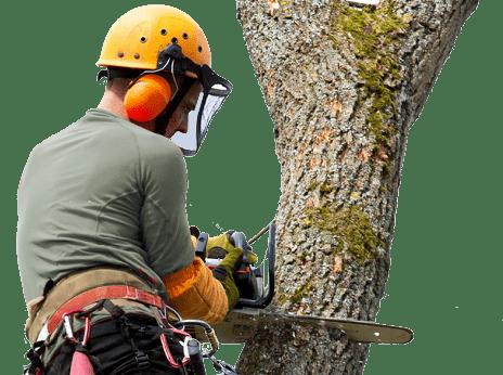 treeman-treecaresanbernardino